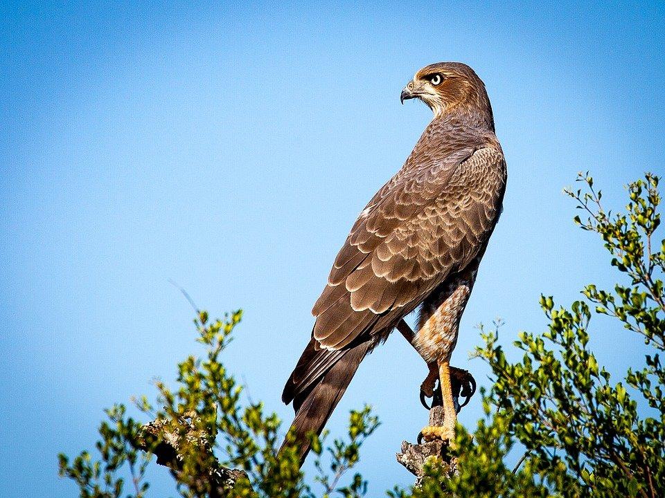 Bushnell Falcon